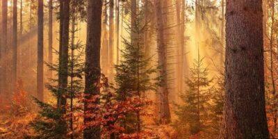 Woodland burials are an inspiring alternative to cemetery burials
